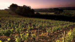loire valley vineyards at sunset